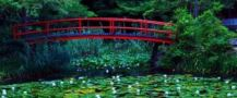 red footbrigde over lily pads